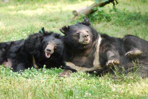 Bears Pippin & Bronwyn.