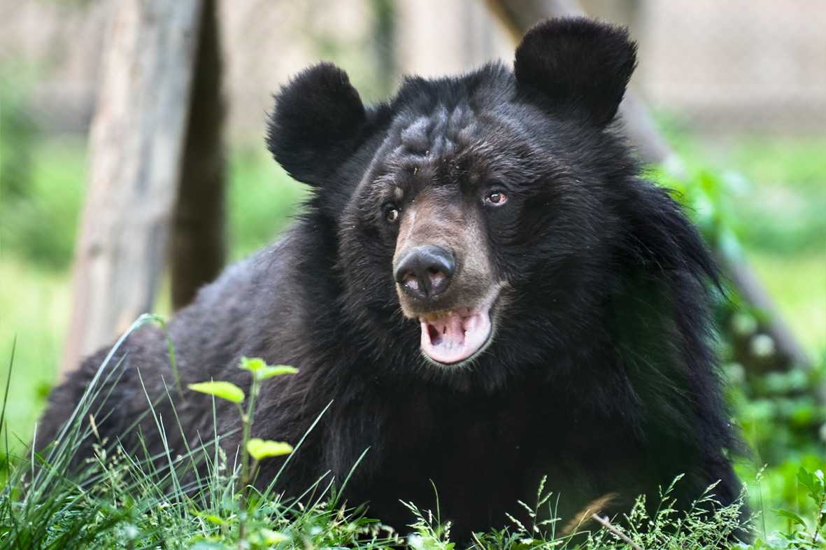 Bears and beyond: the future of animal welfare
