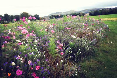 Wild flowers with view of hills