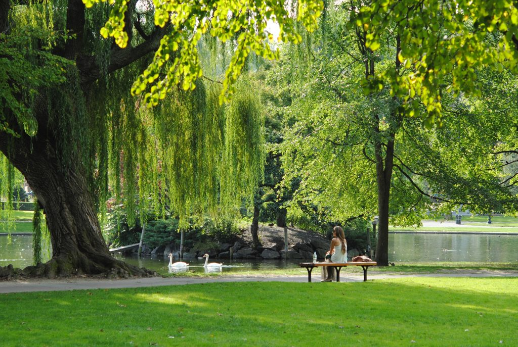 Park with trees and swans