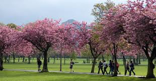 Meadows, Edinburgh